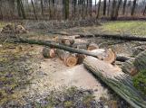 V lesoparku Litavka právě probíhá kácení nebezpečných topolů a olší