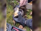 Hasiči vyprostili veverku, která uvázla v ptačí budce