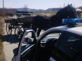 Městská policie odchytávala splašené koně se spřežením