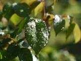 Po víkendu bude až 24 stupňů, pak se ochladí a začne pršet