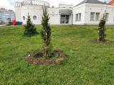 Jan Konvalinka: Aby naše město bylo i nadále svěží a zelené, vysadilo se v průběhu dubna 63 nových stromů a 147 keřů