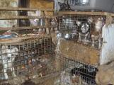 Nezodpovědní chovatelé podporují existenci množíren