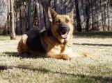 Pes vypátral dva zloděje na několik kilometrů