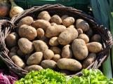 Farmářské trhy jsou otevřeny. Nabídnou zeleninu, uzeniny, med nebo sadbu