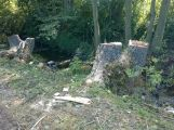 V lesoparku bylo pokáceno několik stromů (AKTUALIZOVÁNO)