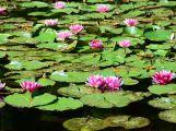 Město nejspíš pronajme rybníky v lesoparku rybářskému svazu