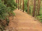 MF DNES: Šéf příbramských městských lesů v minulosti zbankrotoval
