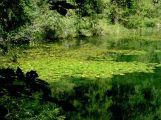 Ve středních Čechách přibude osm nových přírodních památek, jedna i na Příbramsku