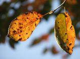 V listopadu budou přes den teploty v průměru kolem pěti stupňů