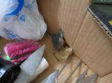 Jen pro silné žaludky: V restauraci U Chudáčka našli kontroloři mrtvé myši