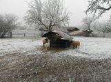 Pět březích ovcí našlo azyl v Ekologickém centru v Orlově