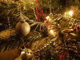I po Vánocích může být stromek užitečný, přihlaste ho do soutěže