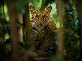 Fotograf Petr Bambousek: To, že by mě zvířata honila po lese, se nestává