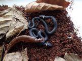 V Domě Natura se povedl první letošní odchov hadů