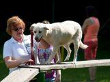 Dobříšští strážníci připravují seminář pro majitele psů
