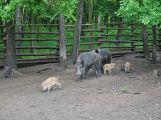 Ve Skorotíně nedaleko Příbrami byla otevřena obora se zvířaty