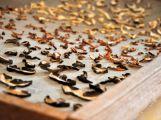 Sbírat houby v rizikových oblastech mykologové zrovna nedoporučují