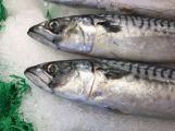 Jak upravovat ryby se dozvíte na sobotních farmářských trzích