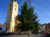 Fotogalerie: Vánoční strom v Příbrami už je na svém místě