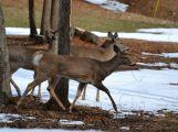 Chcete v zimě přilepšit lesní zvěři něčím dobrým? Jděte na to s rozumem.