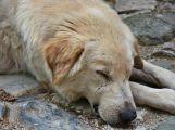 Včerejší příbramský případ týrání psa byl tragický, není však ojedinělý