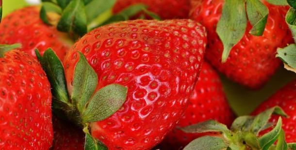 České jahody letos podraží na 120 až 150 korun za kilogram