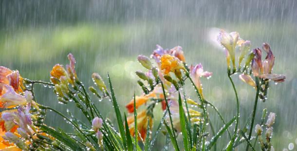 Na svatého Medarda meteorologové čekají deštivé počasí